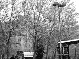 Nieve 03