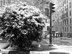 Nieve 06