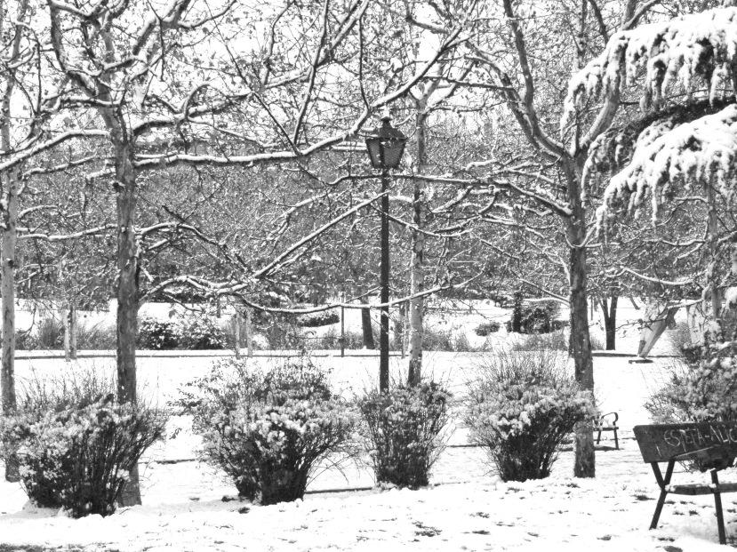 Nieve 12