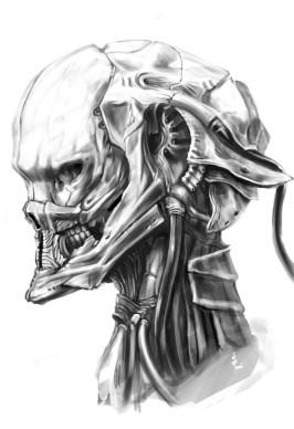 Skull 02 by kometani