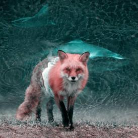 Los animales fantásticos de Julien Tabet-003