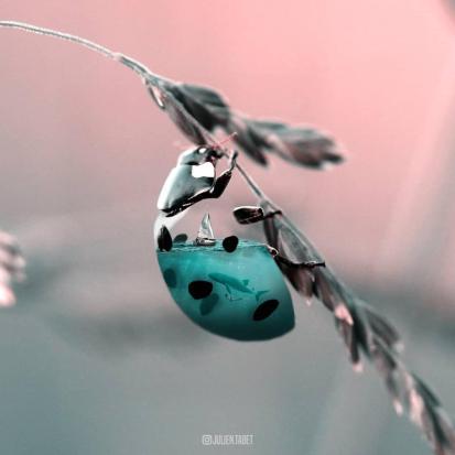Los animales fantásticos de Julien Tabet-009