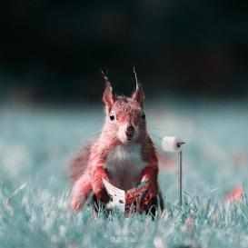 Los animales fantásticos de Julien Tabet-016