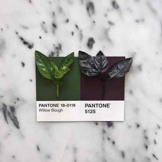 food-pantone-swatches-lucy-litman-16