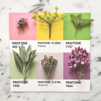 food-pantone-swatches-lucy-litman-18