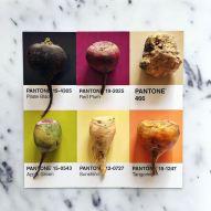 food-pantone-swatches-lucy-litman-4