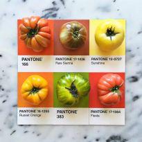 food-pantone-swatches-lucy-litman-5
