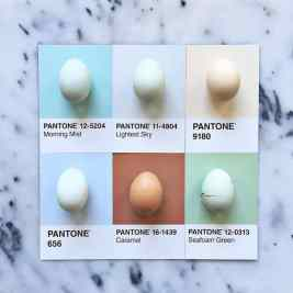 food-pantone-swatches-lucy-litman-8